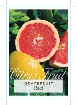 Picture of FRUIT GRAPEFRUIT RED