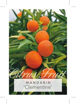 Picture of FRUIT MANDARIN CLEMENTINE