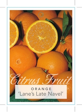 Picture of **FRUIT ORANGE LANES LATE NAVEL