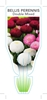 Picture of ANNUAL BELLIS PERENNIS DOUBLE MIX