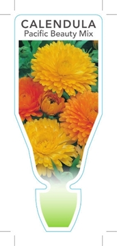 Picture of ANNUAL CALENDULA PACIFIC BEAUTY MIX