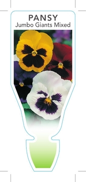 Picture of ANNUAL PANSY JUMBO GIANT MIXED (Viola x wittrockiana)