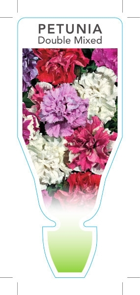 Picture of ANNUAL PETUNIA DOUBLE MIXED PICTURE (Petunia x hybrida)