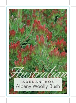 Picture of ADENANTHOS CUNNINGHAMII ALBANY WOOLLY BUSH