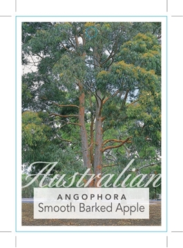 Picture of ANGOPHORA COSTATA SMOOTH BARKED APPLE