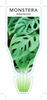 Picture of HOUSEPLANT MONSTERA ADANSONII SWISS CHEESE PLANT