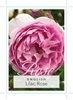 Picture of ROSE LILAC ROSE (ER)