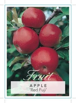 Picture of FRUIT APPLE RED FUJI