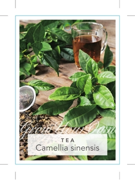 Picture of CAMELLIA SINENSIS (SYN C. THEA) TEA
