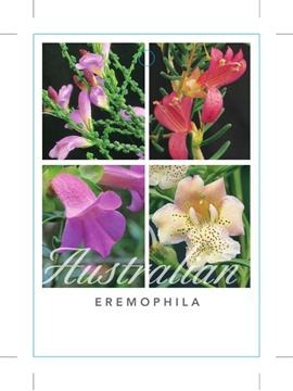 Picture of EREMOPHILA EMU BUSH - MIXED PICTURE (UNNAMED VARIE