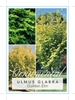 Picture of ULMUS GLABRA LUTESCENS GOLDEN ELM Jumbo Tag