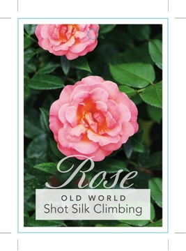 Picture of ROSE SHOT SILK  (CL) (OW)