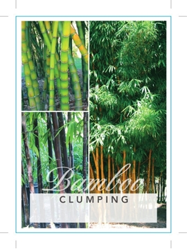 Picture of BAMBOO CLUMPING (MIXED PICTURE) Jumbo Tag