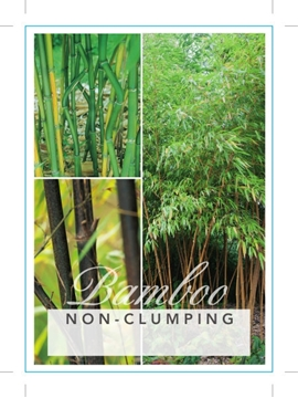 Picture of BAMBOO NON CLUMPING (MIXED PICTURE) Jumbo Tag