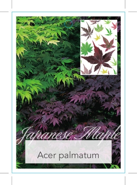 Picture of ACER PALMATUM VARIETY MIXED PICTURE (UNNAMED)